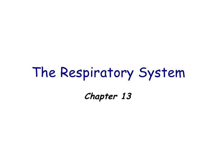 The Respiratory System  <ul><li>Chapter 13 </li></ul>