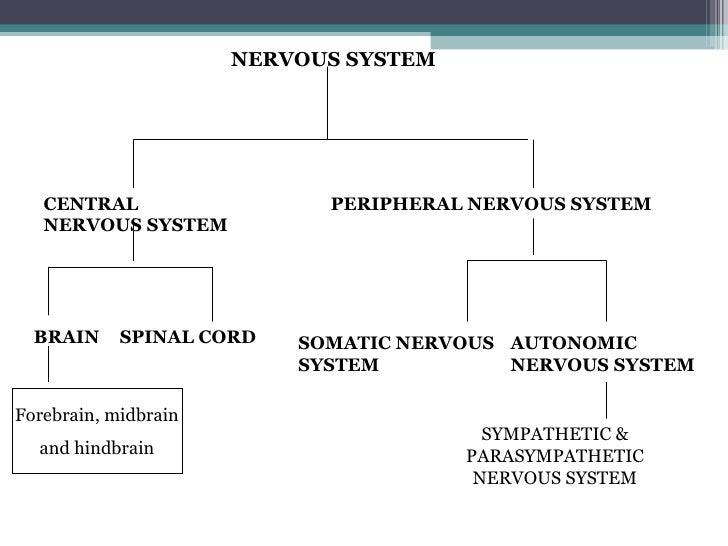 physiological basis of behaviour Lee ahora en digital con la aplicación gratuita kindle.
