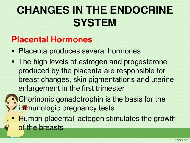 102 24 Endocrine 20System besides The Human Brain Its Parts And Functions further 16525603 further Elements 20of 20chakras as well Physiological Changes During Pregnancy 33832831. on pituitary gland part endocrine system
