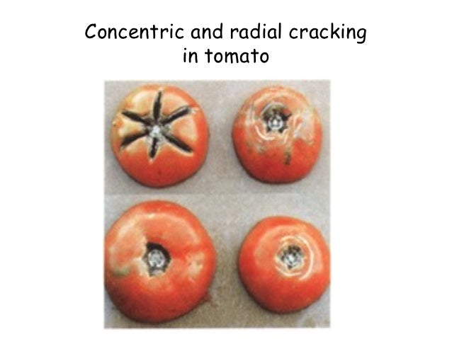 physiological disorder We've developed this overview of common tomato pests, diseases &  physiological disorders to help tomato growers avoid problems — or should they  arise,.