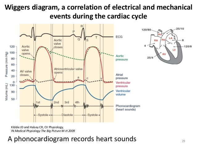 Costanzo Phases Of Cardiac Cycle Diagram Wiring Diagram