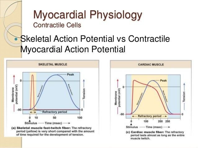 Physiology of heart 8 myocardial physiology contractile cells skeletal action potential ccuart Image collections