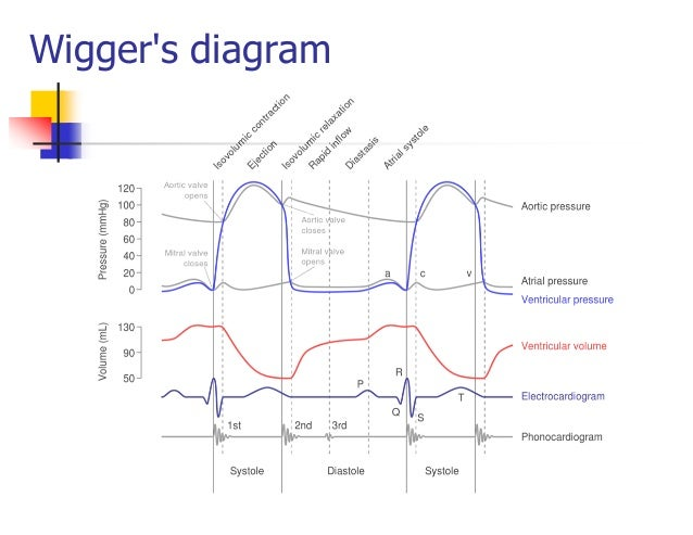 Cardiac cycleheart sounds and ecg wiggers diagram 15 ccuart Images