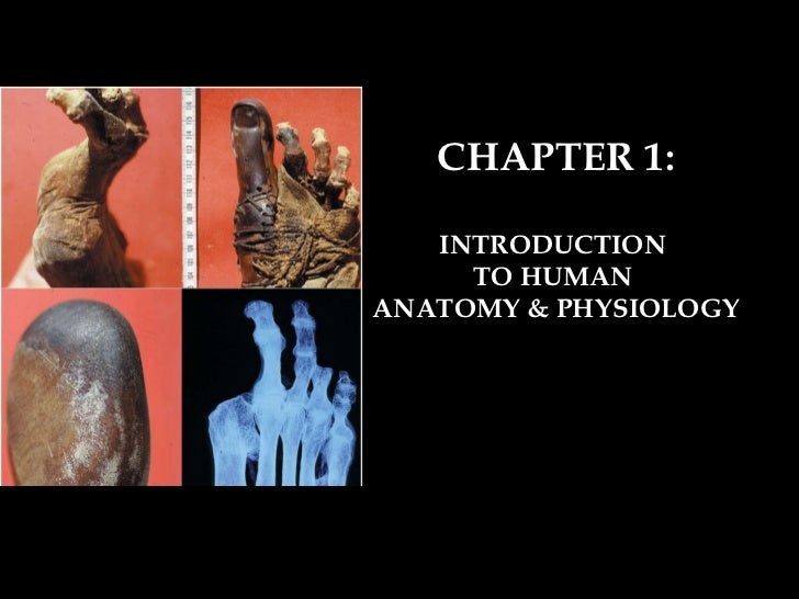 CHAPTER 1: INTRODUCTION  TO HUMAN  ANATOMY & PHYSIOLOGY