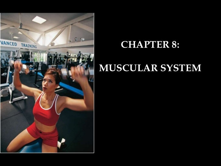 CHAPTER 8: MUSCULAR SYSTEM