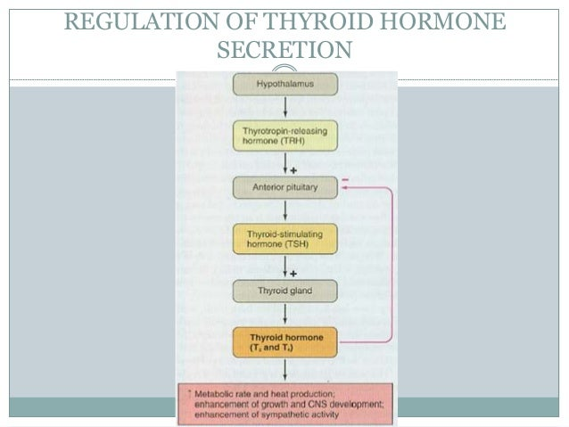 thyroid hormone produced in gut gallery