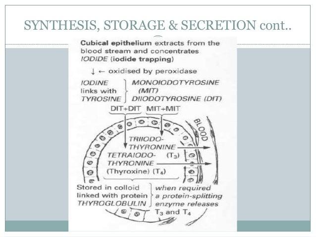 SYNTHESIS, STORAGE & SECRETION cont..