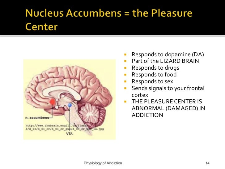 Physiology and sexual addiction