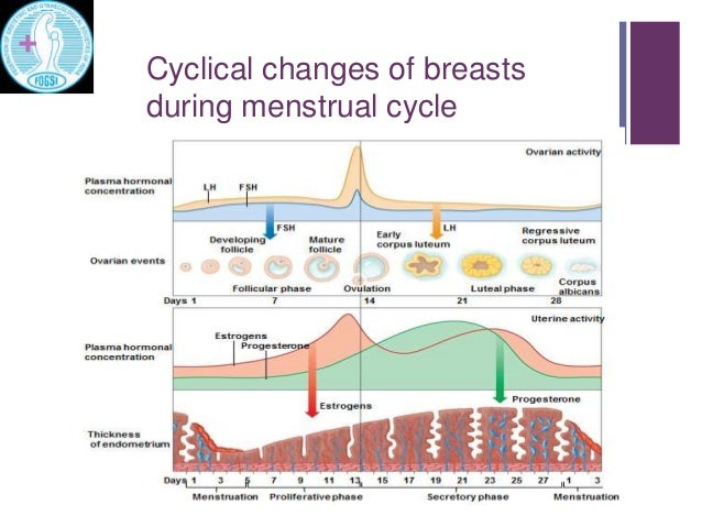 Physiology of breast