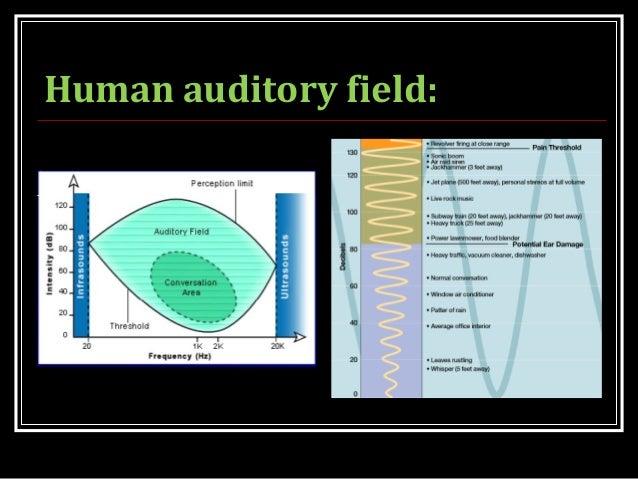Human auditory field: