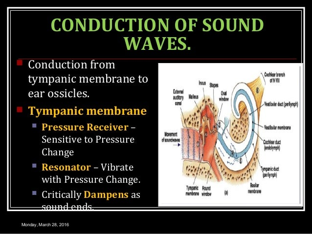 CONDUCTION OF SOUND WAVES.  Conduction from tympanic membrane to ear ossicles.  Tympanic membrane  Pressure Receiver – ...