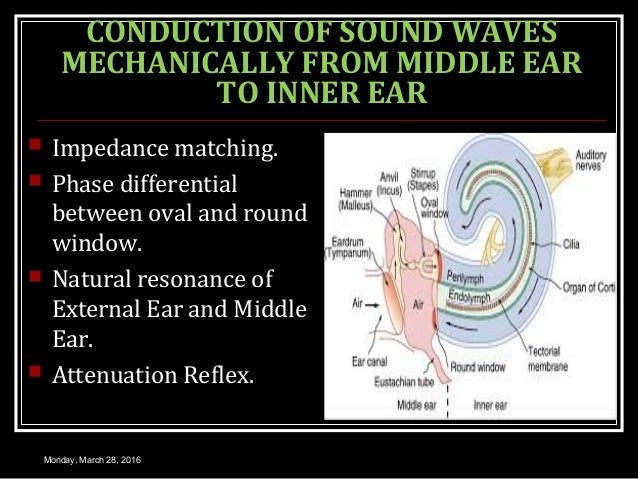 CONDUCTION OF SOUND WAVES MECHANICALLY FROM MIDDLE EAR TO INNER EAR  Impedance matching.  Phase differential between ova...