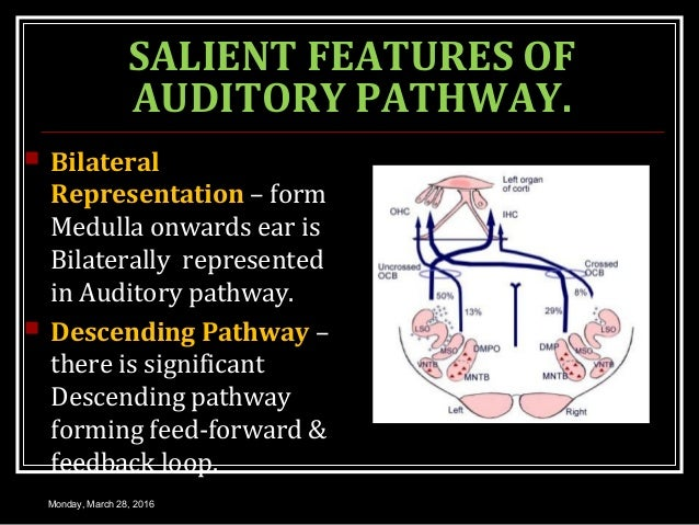 SALIENT FEATURES OF AUDITORY PATHWAY.  Bilateral Representation – form Medulla onwards ear is Bilaterally represented in ...