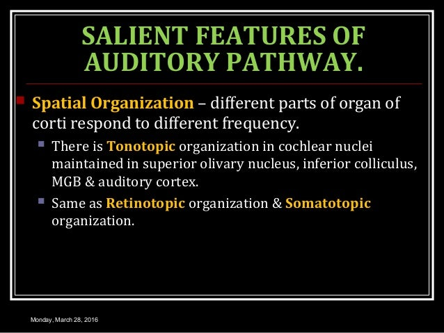 SALIENT FEATURES OF AUDITORY PATHWAY.  Spatial Organization – different parts of organ of corti respond to different freq...