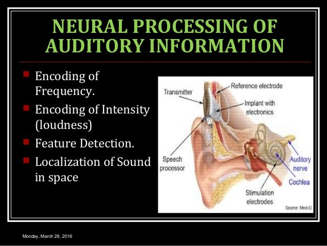 NEURAL PROCESSING OF AUDITORY INFORMATION  Encoding of Frequency.  Encoding of Intensity (loudness)  Feature Detection....