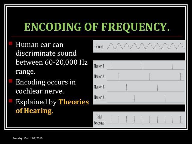 ENCODING OF FREQUENCY.  Human ear can discriminate sound between 60-20,000 Hz range.  Encoding occurs in cochlear nerve....