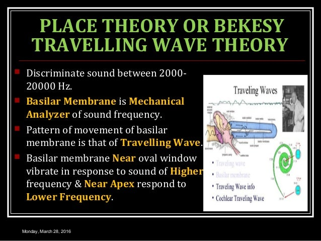 PLACE THEORY OR BEKESY TRAVELLING WAVE THEORY  Discriminate sound between 2000- 20000 Hz.  Basilar Membrane is Mechanica...