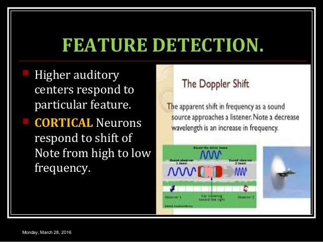 FEATURE DETECTION.  Higher auditory centers respond to particular feature.  CORTICAL Neurons respond to shift of Note fr...