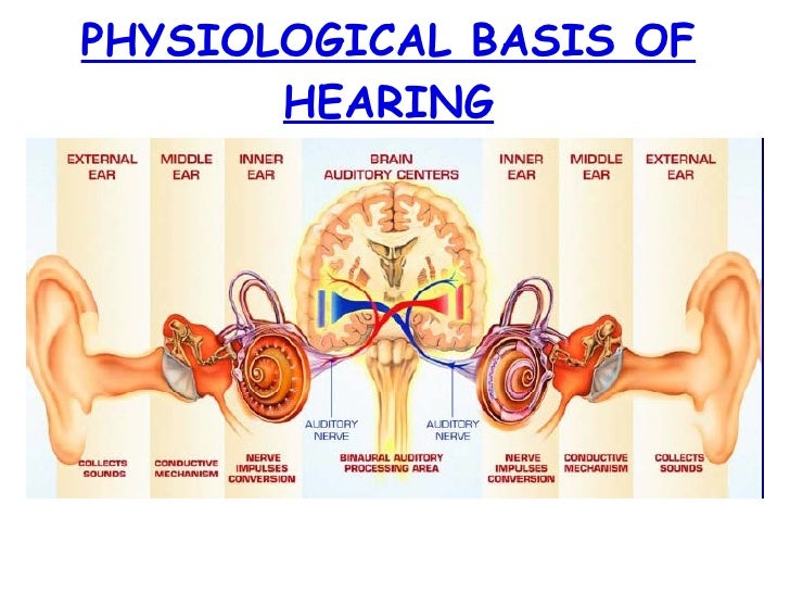 PHYSIOLOGICAL BASIS OF HEARING