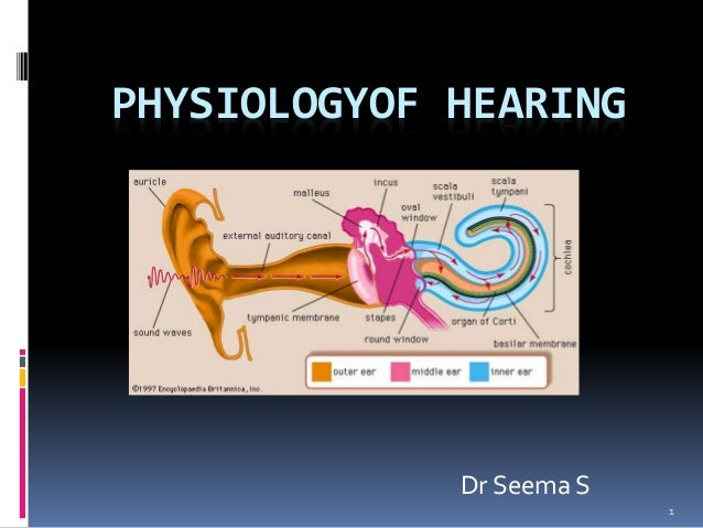 Physiology of hearing