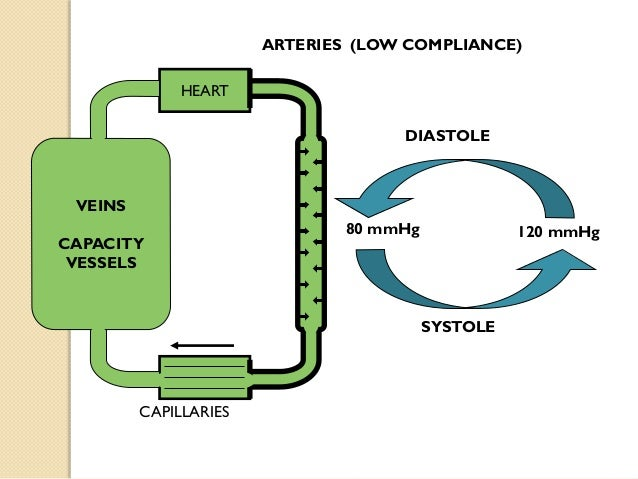 Cardiac Chambers & their functions The human HEART is consist of four chambers: Two atria (right and left) which are sepa...