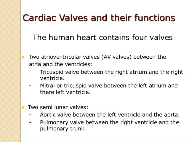 The left ventricle pumps blood through the systemic circulation. It is cylindrical in shape and normally has a thicker w...