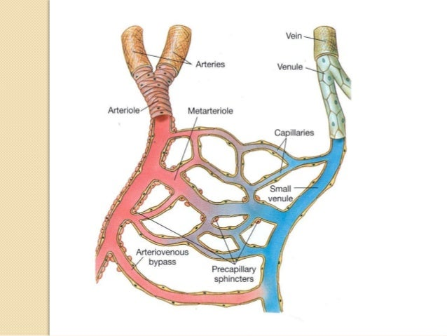 Heart Sounds  Heart sounds are the noises generated by the beating heart and the resultant flow of blood through it.  Sp...