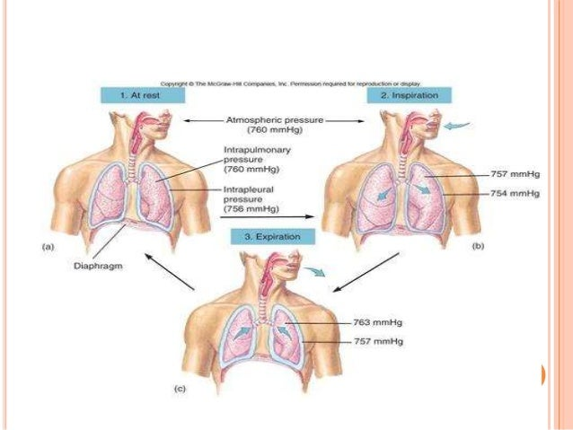 Physiology of lung