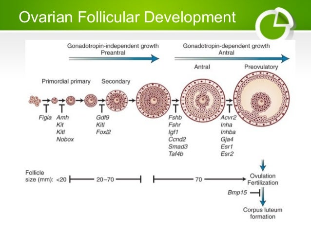 gonadal steroidogenesis in teleost fish