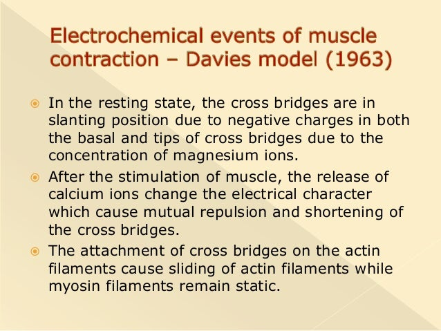 events of muscle contraction
