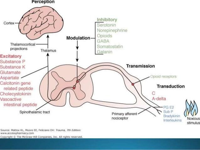 Pathways of Pain
