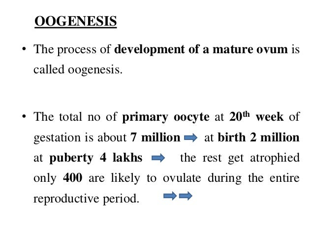 Physiological changes during pregnancy Slide 3