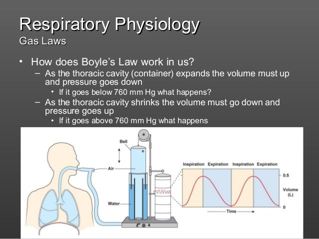 Physiology Of Respiratory System