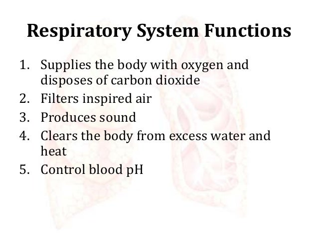 Respiratory System - Physiology