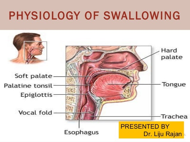 Diagram Of Swallowing Mechanism Explore Schematic Wiring Diagram