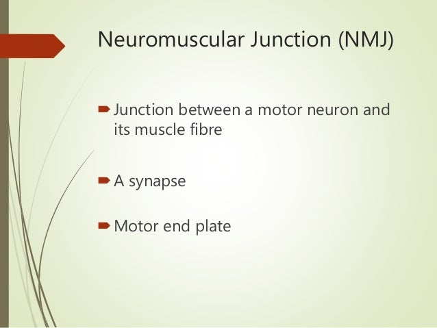 Physiology of the Neuromuscular Junction Slide 2