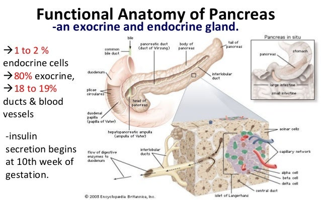 Physiology of thyroid and pancreas.pptx