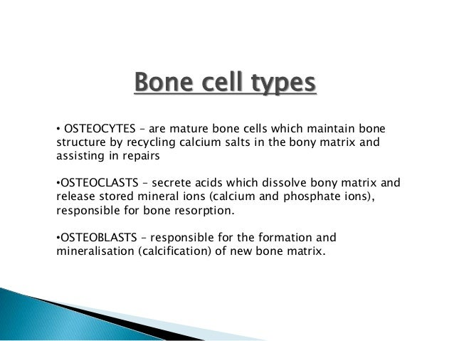Mature bone cells