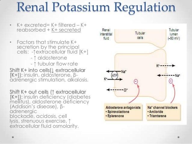 Kidney Regulation and Methods