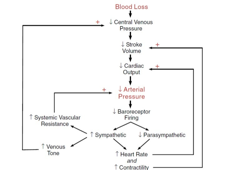 Physiology Shock