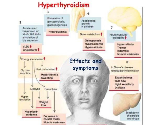 Physiology thyroid hormone