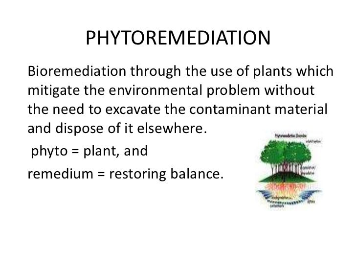 PHYTOREMEDIATIONBioremediation through the use of plants whichmitigate the environmental problem withoutthe need to excava...