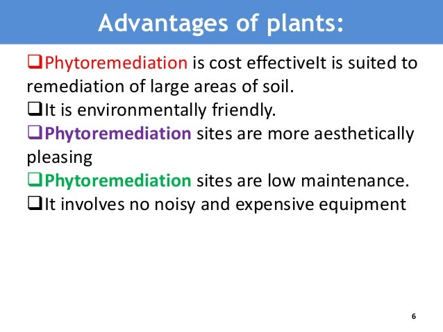 Advantages & Disadvantages of Phytomining