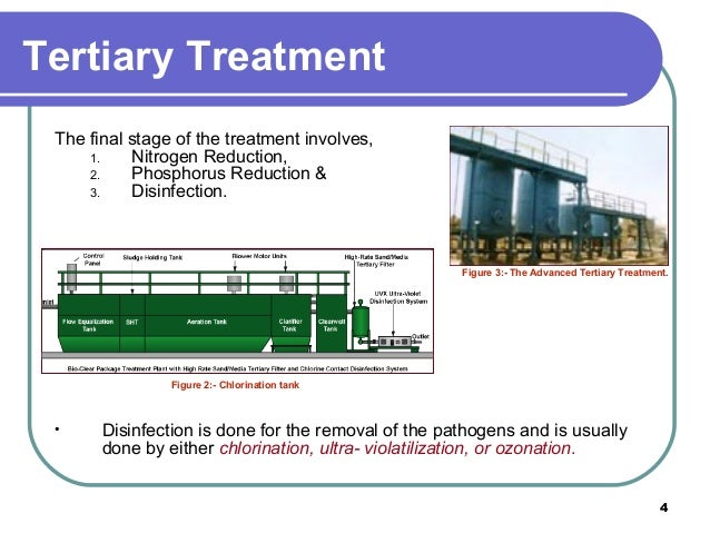 Phytoremediation, an option for tertiary treatment of sewage