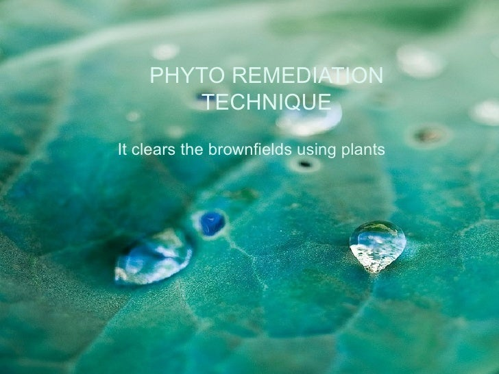 PHYTO REMEDIATION       TECHNIQUEIt clears the brownfields using plants