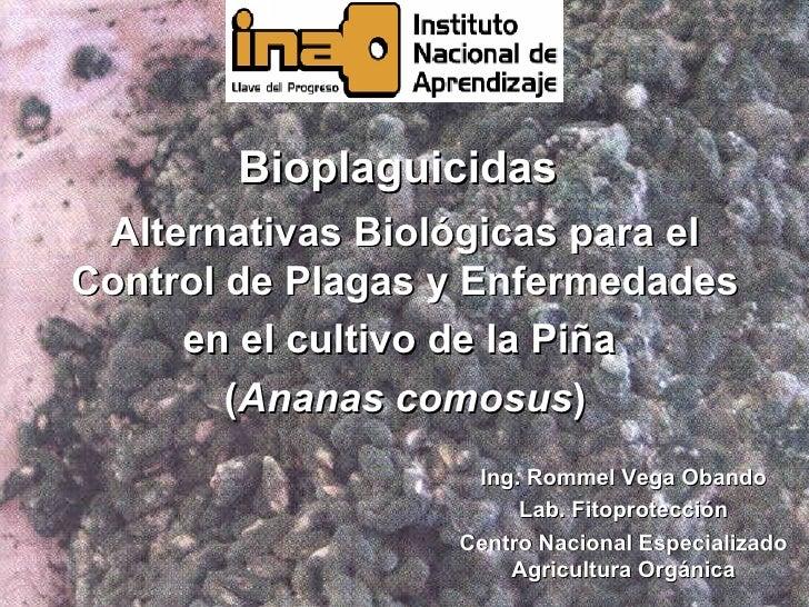 Bioplaguicidas Alternativas Biológicas para elControl de Plagas y Enfermedades     en el cultivo de la Piña        (Ananas...