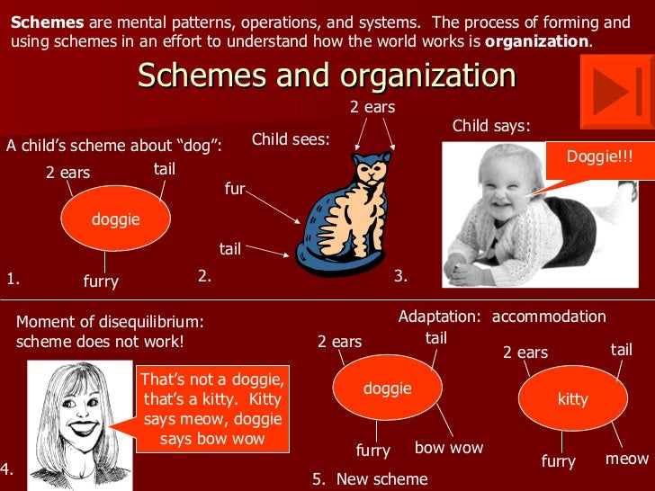 assimilation or accommodation essay Children, according to piaget, develop through assimilation or through using an   this is then followed by accommodation when existing schema has to be.