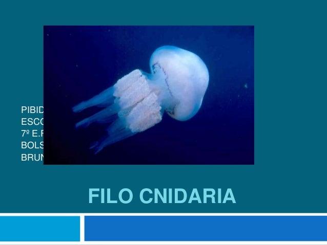 FILO CNIDARIA PIBID BIOLOGIA ESCOLA ESTADUAL DR. RAIMUNDO ALVES TORRES 7º E.F BOLSISTAS:LUIZ CARLOS DA COSTA BRUNO GEOVANE