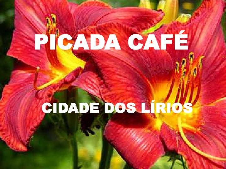 PICADA CAFÉ<br />CIDADE DOS LÍRIOS<br />