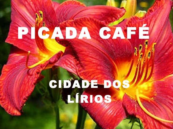 PICADA CAFÉ CIDADE DOS LÍRIOS